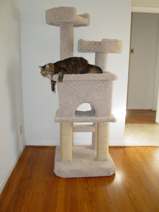 Fandango Cat Furniture Cat Condos Cat Trees Dog Steps